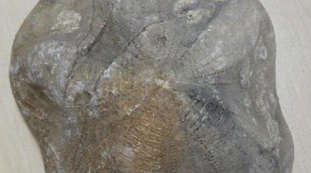 4 milyon lira olan 2 fosil ele geçirildi