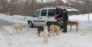 Köpeklerin karnını doyurmak için her gün 50 kilometre yol gidiyor