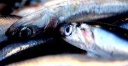 Trabzon'da balık fiyatları son 30 yılın en yüksek rakamını gördü
